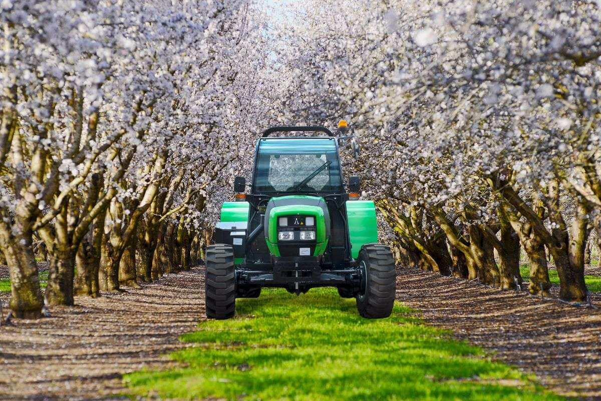 agrofarmtb-almondtreeslr